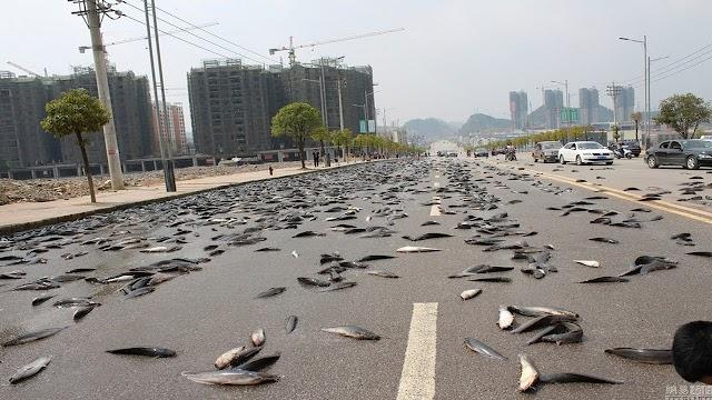 من عجائب الطبيعة ظاهرة سقوط الأسماك من السماء في الهندوراس