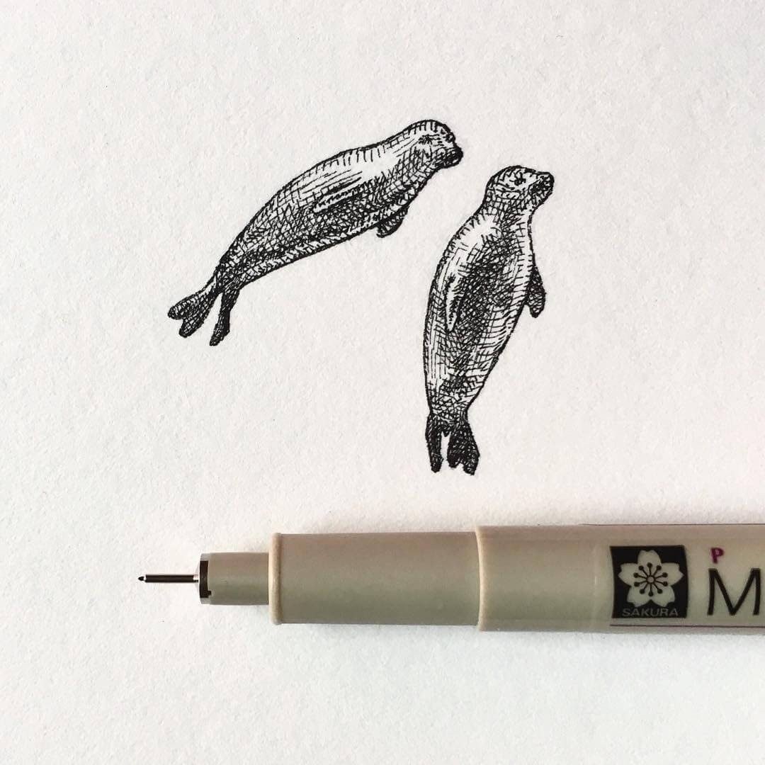 13-Seals-Bryan-Schiavone-Tiny-Animals-in-Pen-and-Ink-Drawings-www-designstack-co