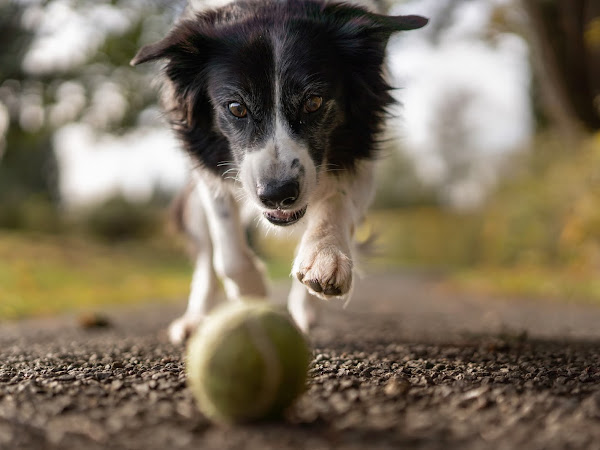 Eight Essential Considerations for New Dog Owners