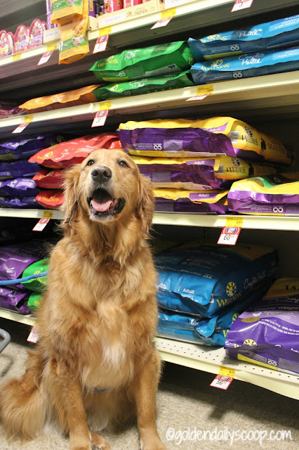 wellness complete health senior dog food available at petsmart