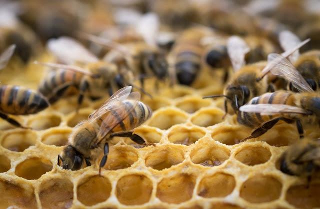 Comment sauvegarder les abeilles ?