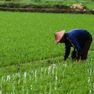 Contoh Judul Skripsi Iesp Menggunakan Variabel Pertanian Lengkap
