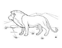 דפי צביעה אריות
