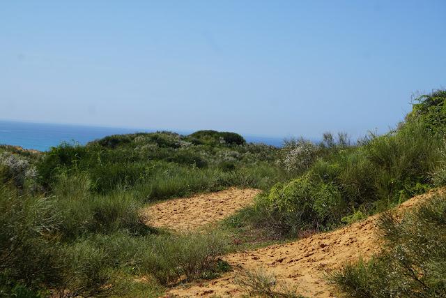 גבעת הכורכר בשמורת פולג