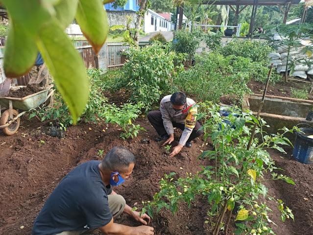 Binmas Polsek Japut Bersama Warga Gunakan Lahan Kosong Tanam Bibit Cabai