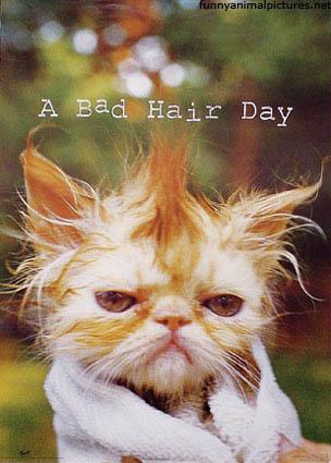 Funny Cat Wallpapers Funny Cat Pictures Desktop