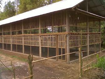 langkah selanjutnya dalam menciptakan sangkar ialah memilih jenis sangkar Cara Membuat Kandang Ayam Kampung - Bagian II: Jenis Kandang