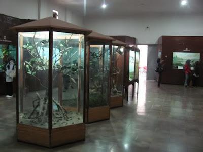Koleksi burung di museum Zoologi Bogor.