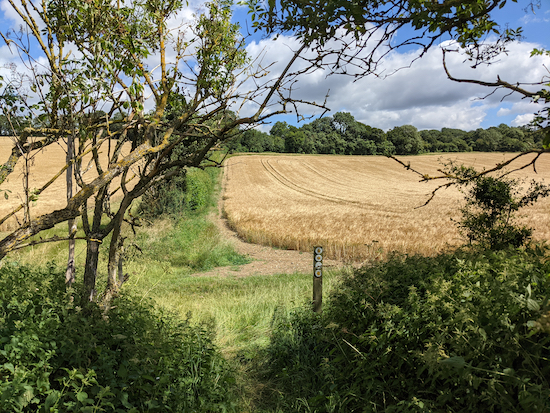 The gap in the hedge on Kings Walden footpath 4 - mentioned above