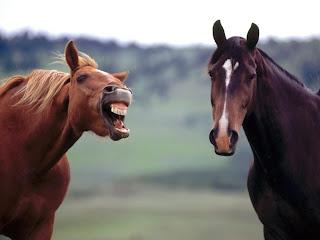 Resultado de imagem para cavalo tossindo