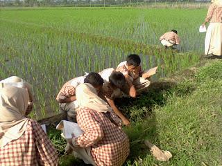 Lembar Kegiatan Siswa: Praktikum Ekosistem