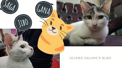 Nama Panggilan Untuk Kucing
