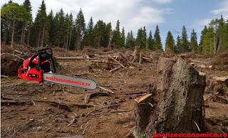 În ce județe s-a exploatat cea mai multă masă lemnoasă anul trecut