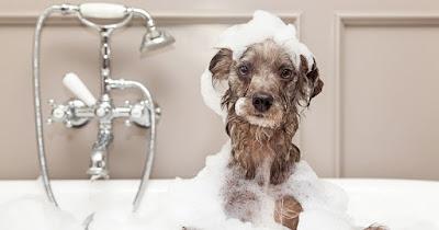 Perro sucio después bañarse