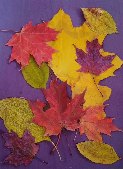 Learn about the colorful autumn leaves in Leaves of Fall by Mari Schuh.  Read Leaves in Fall, go on a nature walk, gather leaves, and make a collage.
