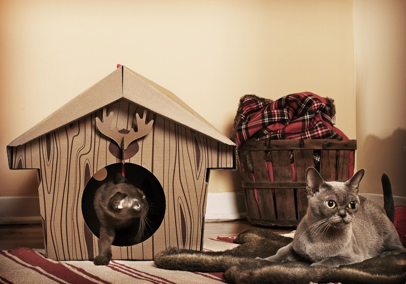 Cat House Made From A Cooler : Creative cat houses and cool bed designs