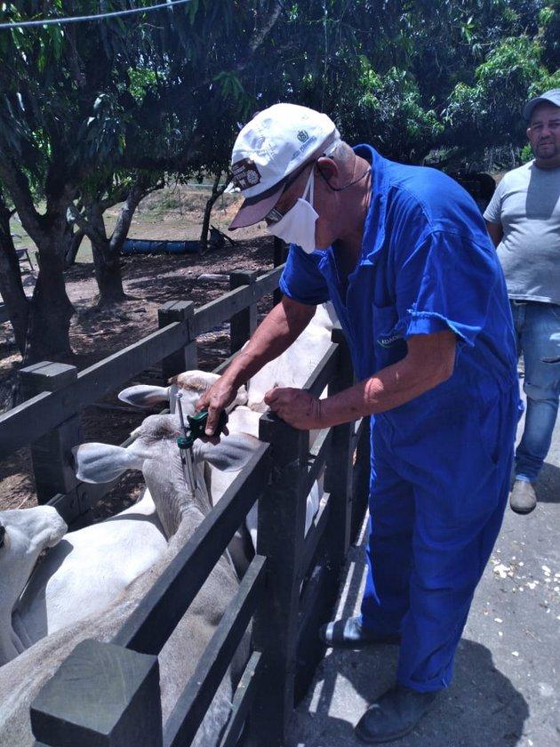 Vacinação contra febre aftosa é prorrogada em Pernambuco