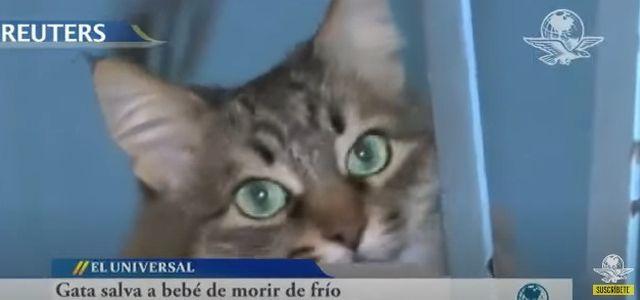 Masha la gata heroína