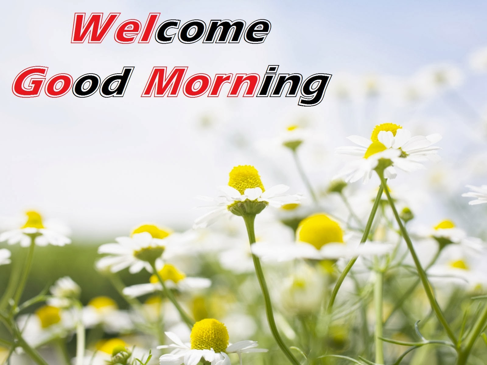 Welcome Good Morning Hd Cards Lovely Wallpapers
