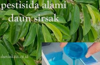 Pestisida Alami Dari Bahan Sederhana daun sirsak