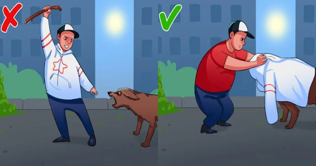 Επίθεση Σκύλου: Τι Πρέπει Να Κάνεις Σε Περίπτωση Που Σου Επιτεθεί Ένας Αδέσποτος Σκύλος