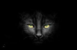 رعب عن القطط السوداء ( القط الجني الاسود)