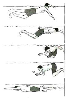 Teknik Berenang Gaya Katak : teknik, berenang, katak, Update, Renang, Diawali, Dengan, Gerakan,, Paling, Heboh!