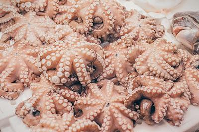 Photo of octopuses by Gary Sandoz on Unsplash