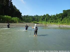 Swiss tourists were enjoying riverwalk and camping tour in Manokwari.