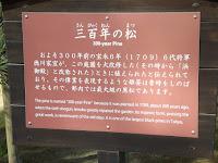 300 year old pine history - Hama-Rikyu Garden, Tokyo, Japan