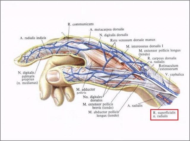 Повреждение сухожилий сгибателей пальцев руки и Чем могут помочь кистевые хирурги из Харькова? (31 больница хирургия кисти в Харькове)