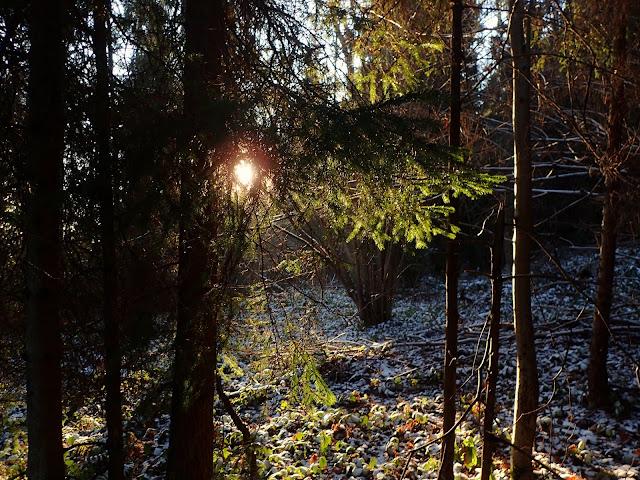 Światło tego dnia jest dość fotogeniczne