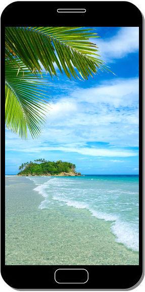 plage tropicale palmier