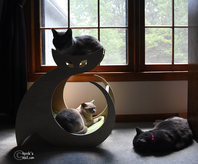 silhouette of cats, cats on cat tree