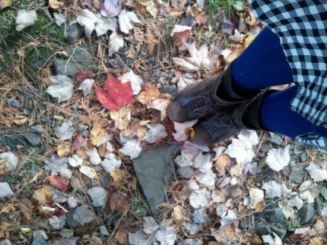 Photo of autumn leaves on the ground.