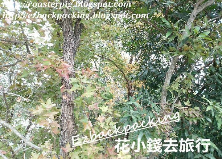 沙田公園紅葉