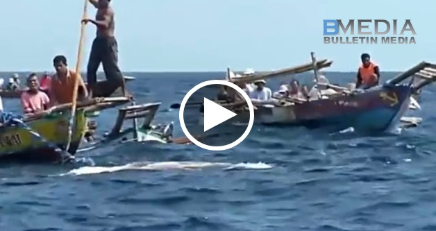 Lelaki Ambil Kayu Panjang Yang Tajam Tikam Ke Arah laut.. Saat Seterusnya Makhluk Besar Yang Muncul Buat Semua Orang Terkejut!!