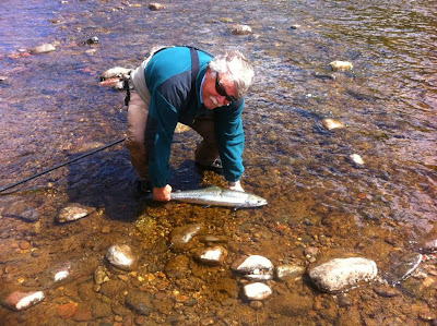 Salmon Fishing Scotland Tay, Perthshire, Scotland Salmon Fishing Report for week ending 12th July 2014.