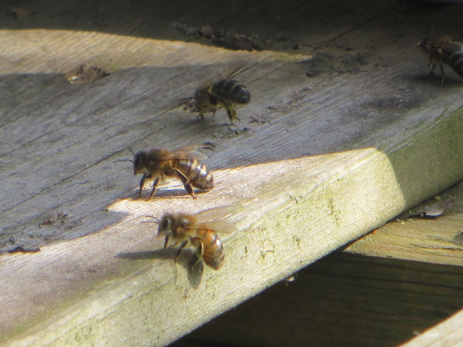 Bees having a buzz
