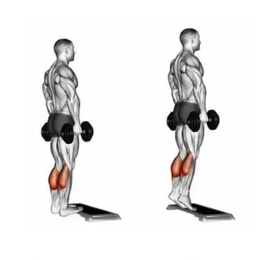 Calf Exercises - Dumbbell standing calf raise
