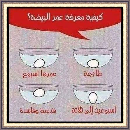 سعر البيض اليوم فى مصر