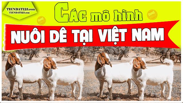 Các mô hình nuôi dê tại Việt Nam