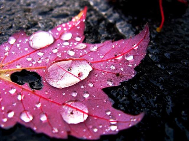 white peppermint diventa miss wonder rain.. finalmente!