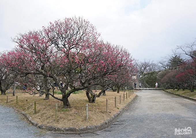Pruniers, parc Maizuru, Fukuoka