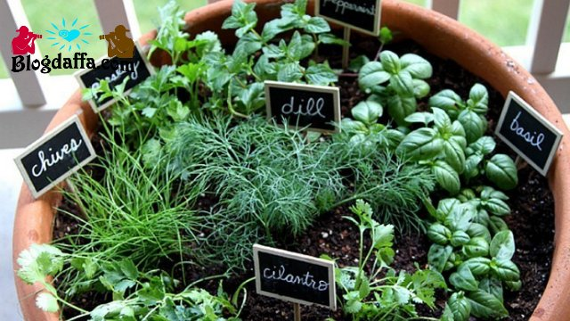 Kebun Sayur Mini dalam Pot Besar