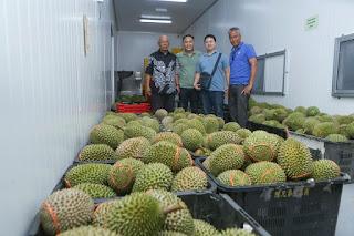 Cerita dari Lipis Durian Musang King