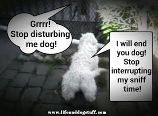Fluffy and neighbor dog.
