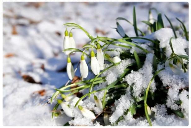 Прогнгоз - рекомендация на 17, 18 марта