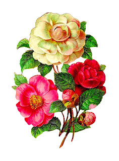 flower camellia image botanical download