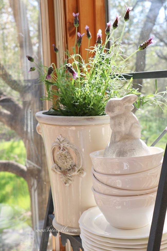 French style ceramic white planter, Spanish lavender, white bunny on plate stand